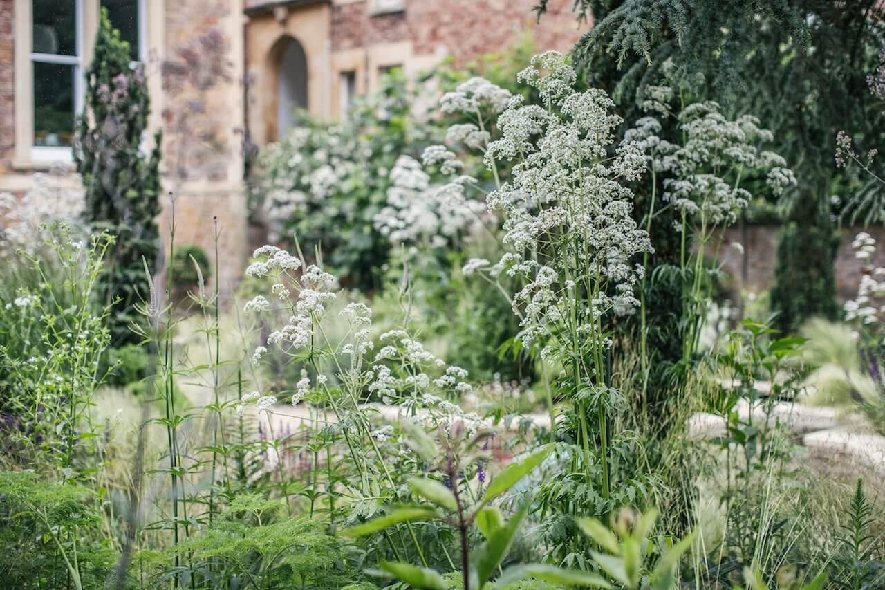 Keeping your Garden Green